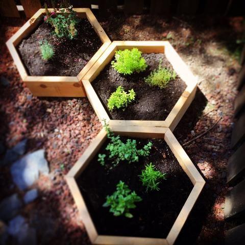 Pollinator Planter Honeycomb Combo Pollinator Garden 400 x 300