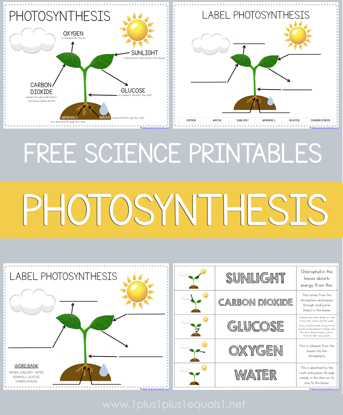 Photosynthesis Printables For Kids Science Printables Free Science Printables Learning Science [ 1455 x 1205 Pixel ]