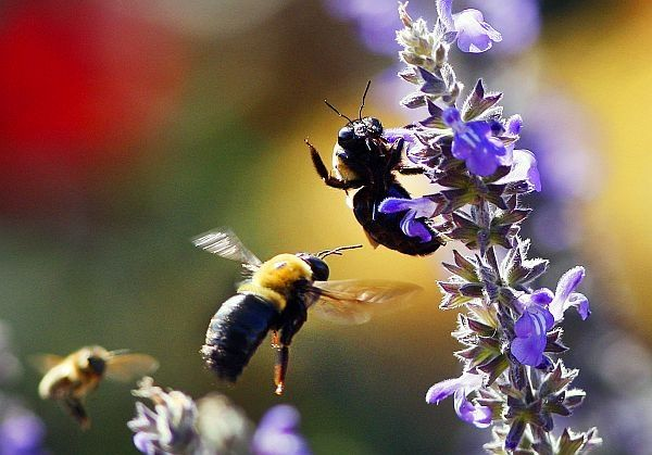 How to Grow: Attracting Bees to Your Garden | Bee, Bee ...