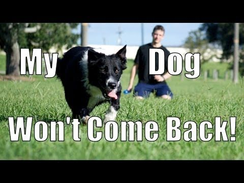 My Dog Takes Off And Won T Come Back How To Train Your Dog Dog Training Books Dog Training Easiest Dogs To Train