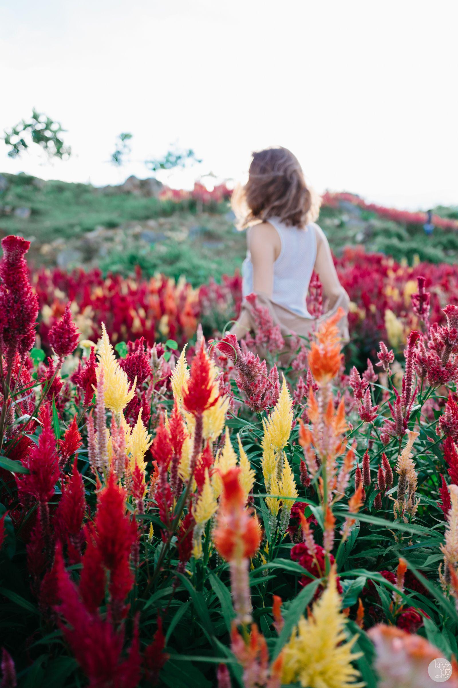Sirao Cebu Philippines Asia Southeastasia Http Www Kryzuy Com Sirao Flower Garden Flower Garden Gardening Photography Flower Garden Design