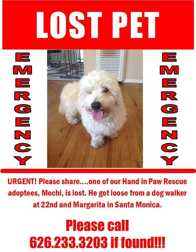 Help This Dog Find His Way Home Pls Share Animals Lost Pets Dog Losing A Pet Losing A Dog Paws Rescue