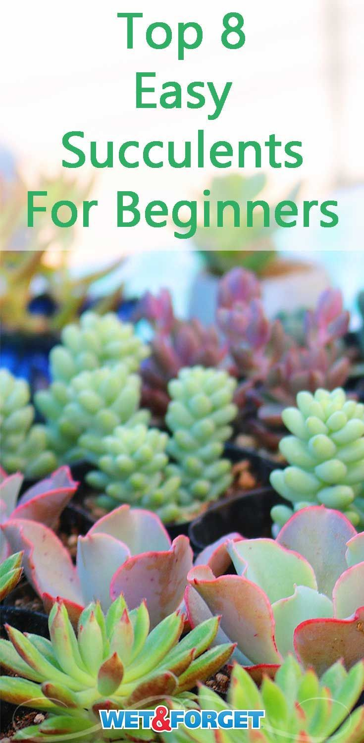 Photo of Easy Succulents for Beginners and How-tos for Indoor Gardeners