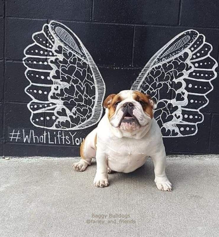Puppy love Nashville! (With images) English bulldog