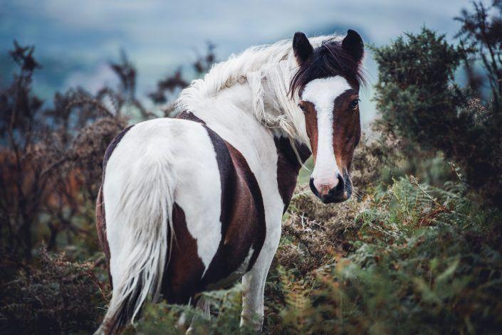 Fotos Pferde In Der Natur I Anna Ibelshauser Pferde Niedliche Pferde Pferde Fotografie