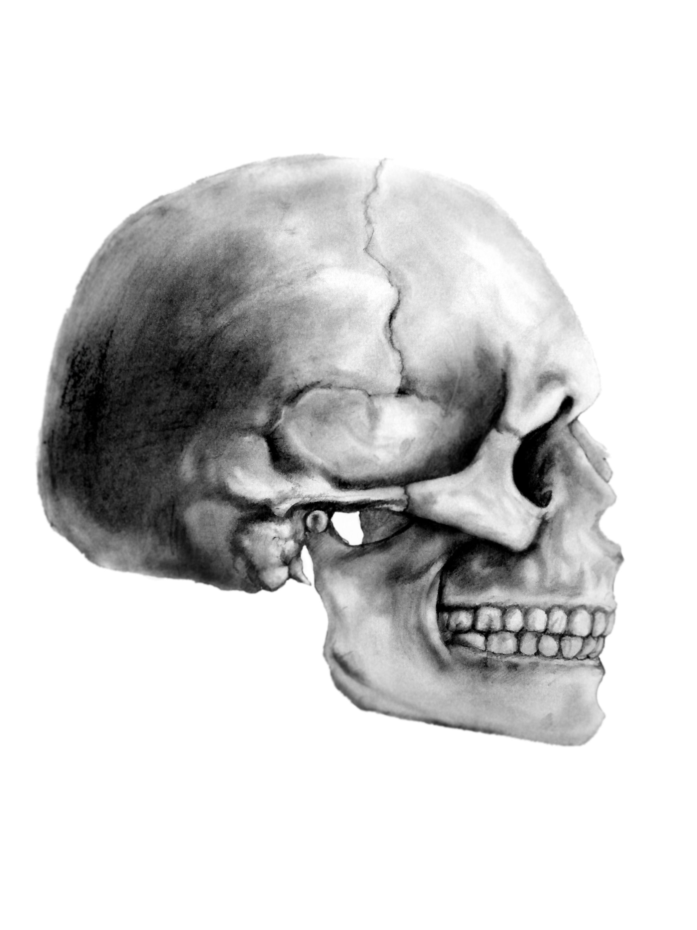 It is a graphic of Obsessed Skull Profile Drawing