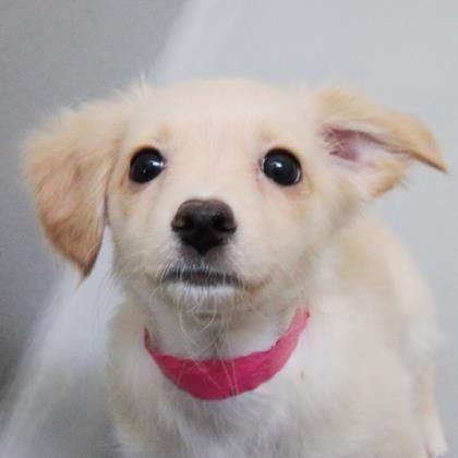 Dogs Cute Animals Dog Adoption Adoption