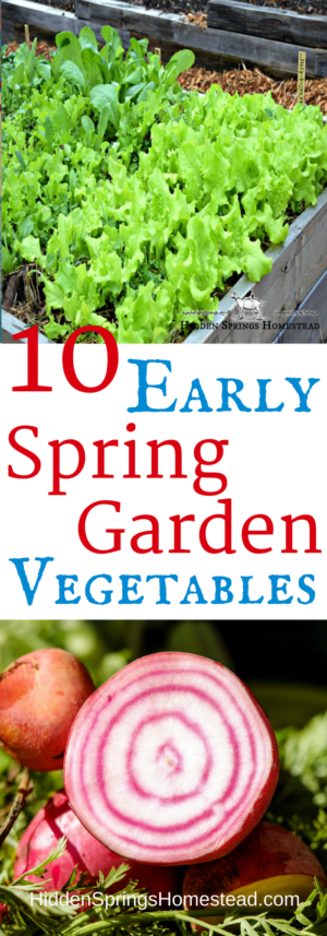 When To Plant Early Spring Vegetables Vegetable Planting 400 x 300