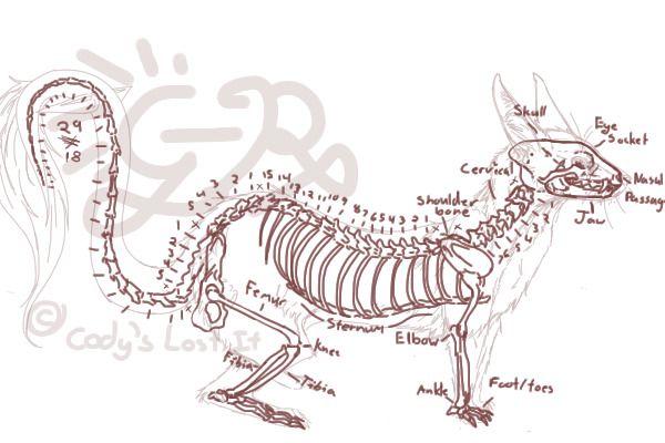 The Ferret Skeleton Ferret Pet Ferret Ferret Clothes