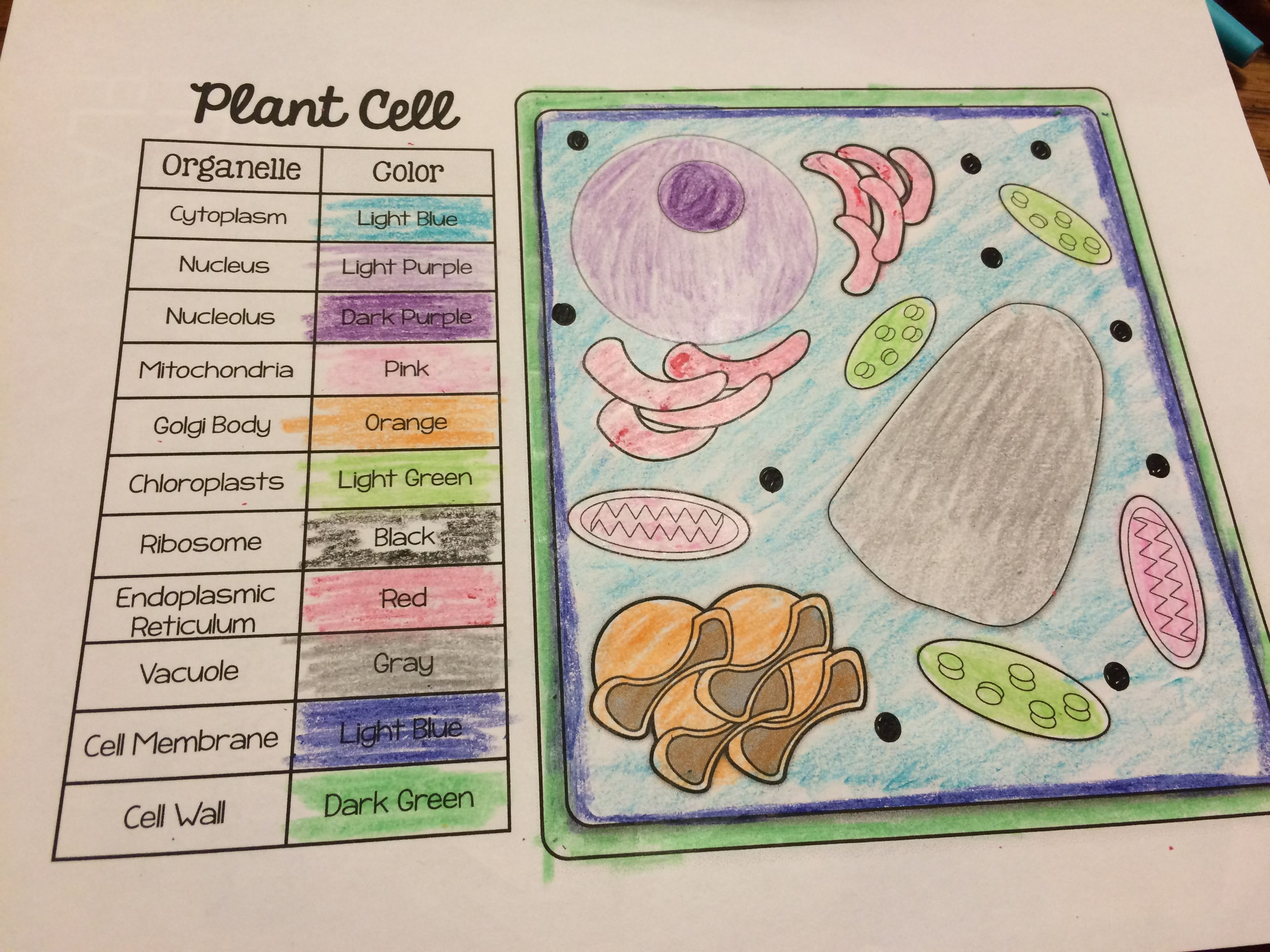 Plant Animal Cell Organelle Match Color Pages Freebie Plant Cell Project Cells Project Science Cells