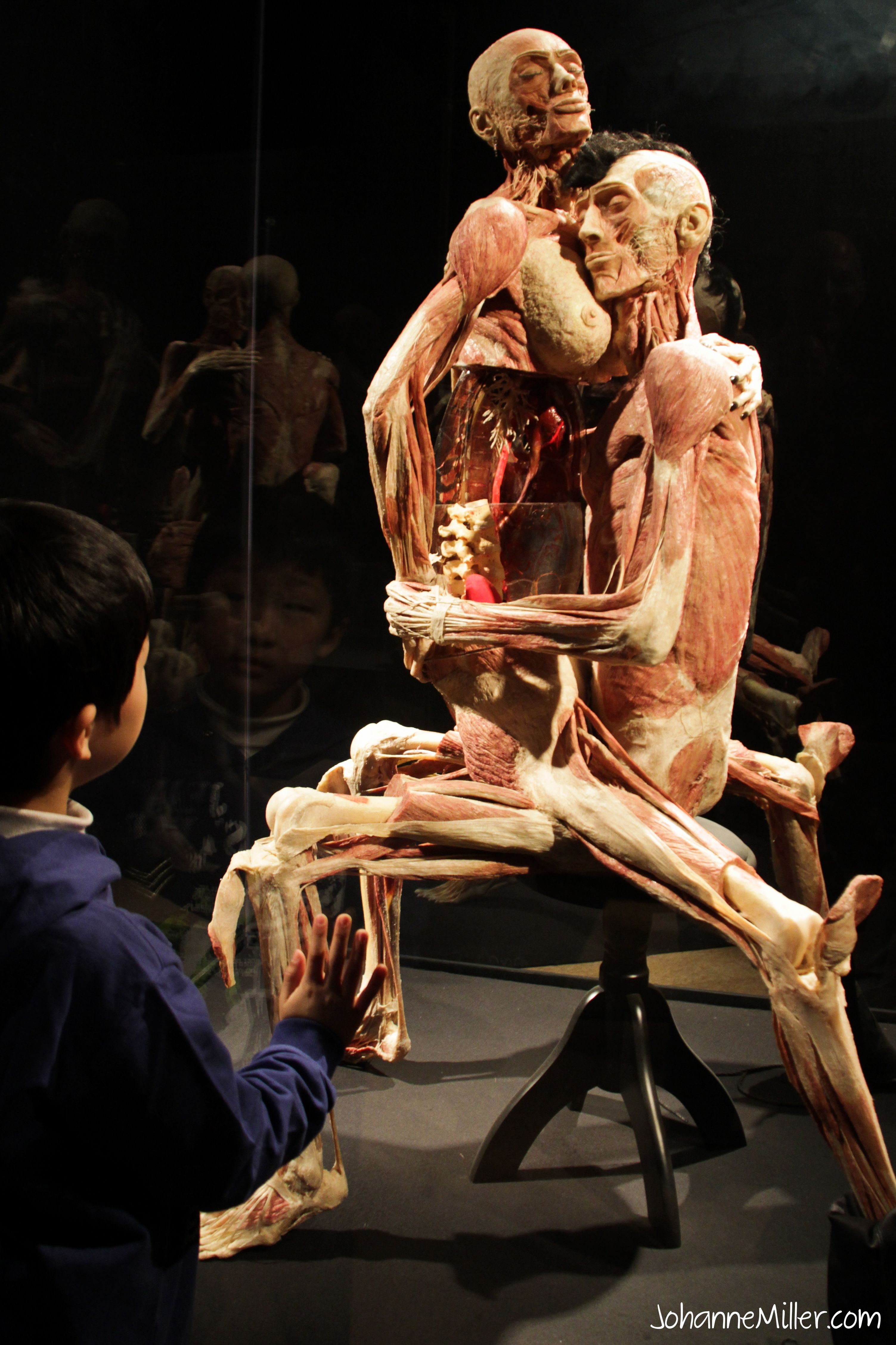 bodies the exhibition Body worlds is the original exhibition of real human bodies - seen by 45  million visitors globally vital celebrates the potential of the human body and the.