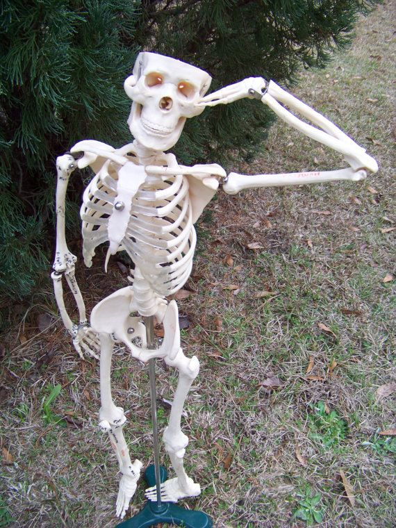 Vintage Plastic Articulated Skeleton By Alloftheabove On Etsy 150 00 Skeleton Model Human Bones Vintage