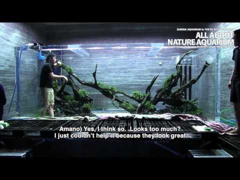 A Series Of Short Documentary Films Featuring The Creation Of Giant Nature  Aquarium Layouts By Takashi Amano, Exhibited Inside Sumida Aquarium In  Tokyo Sky ...