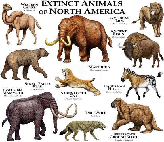 Extinct Mammals of North America Poster Print