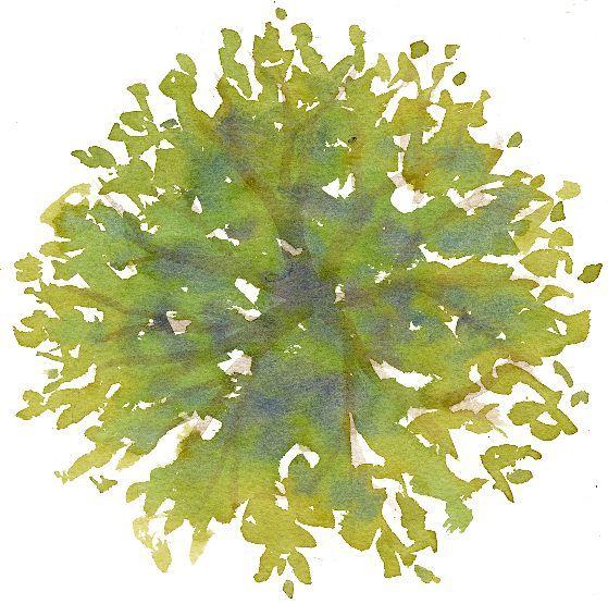 0f9108bdc98582810c9a8e03d32288fc Jpg 559 555 Watercolor Trees Trees Top View Tree Plan