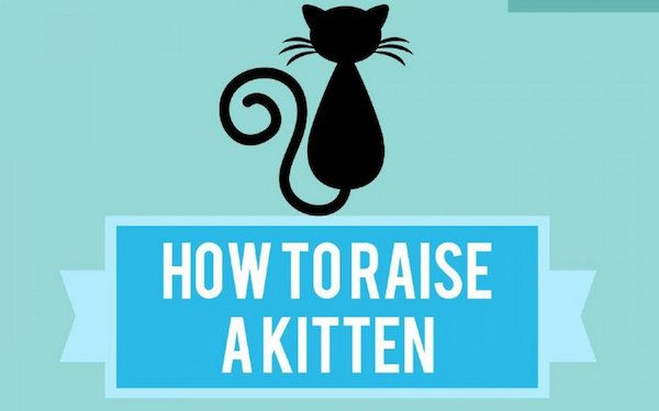 Infographic How To Raise A Kitten Designtaxi Com Kitten Kitten Care Infographic