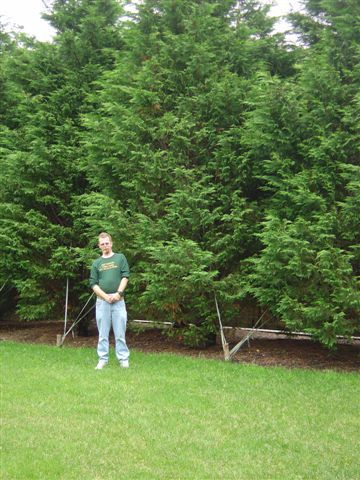 Leyland Cypress Fast Growing Hedge Planting Material