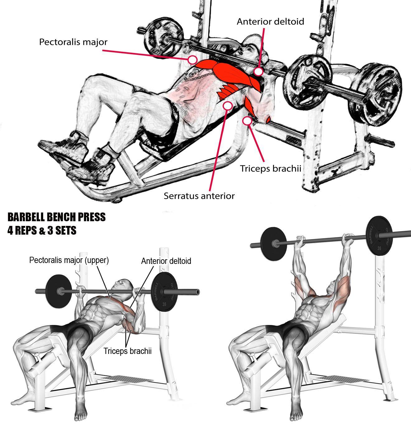 Groovy Bench Press Barbell Dumbbell Sport And Exercise Short Links Chair Design For Home Short Linksinfo