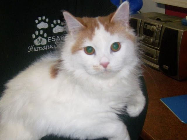Angel Is Up For Adoption At Mesabi Humane Society Virginia Mn She S A Sweetie Humane Society Animals Pets