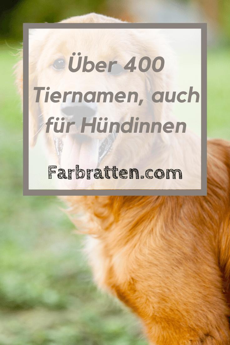 Tiernamen Fur Hundinnen In 2020 Namen Fur Hunde Hundenamen Tiernamen Weiblich