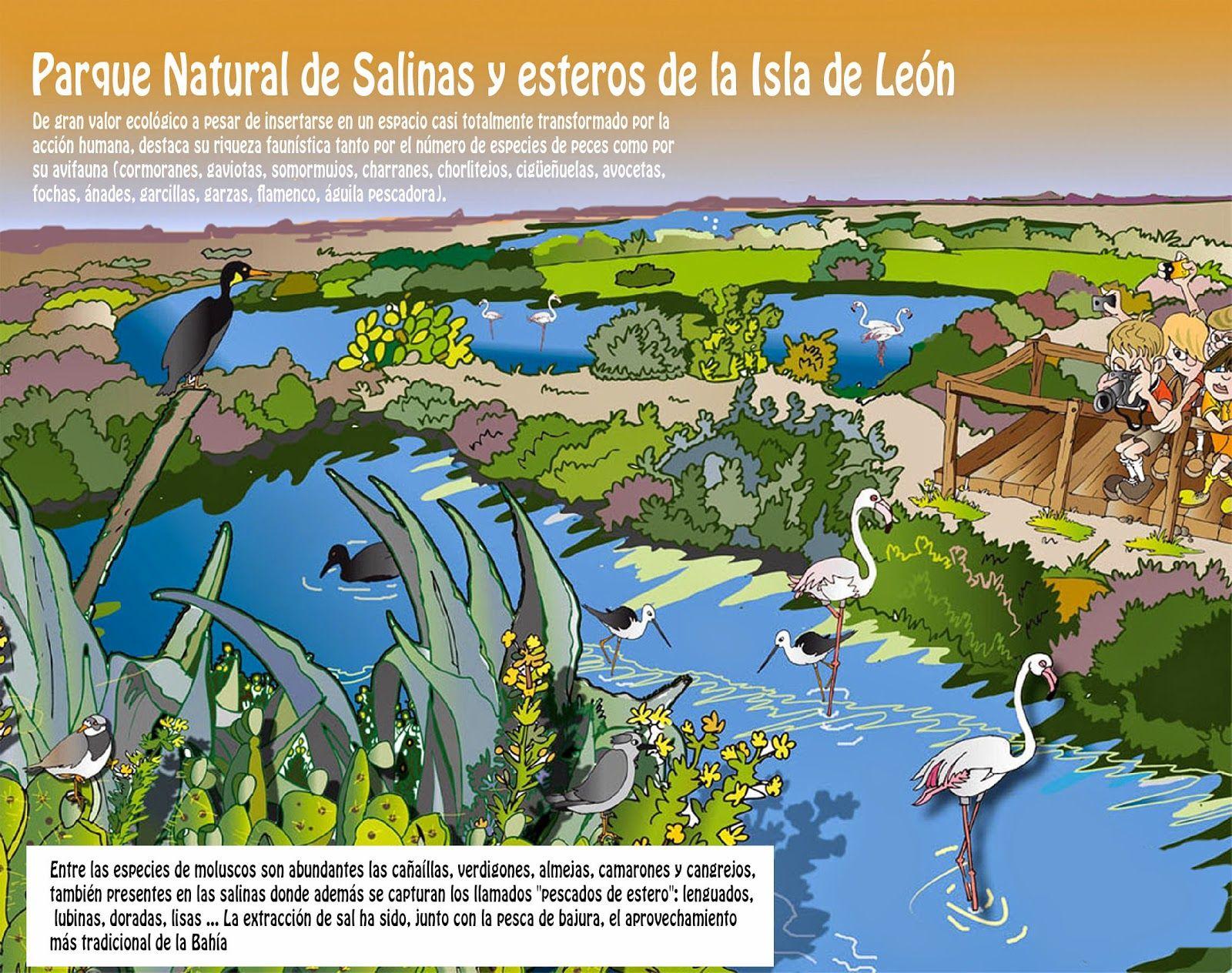 Parque natural de la isla de le n san fernando c diz for Isla leon piscina