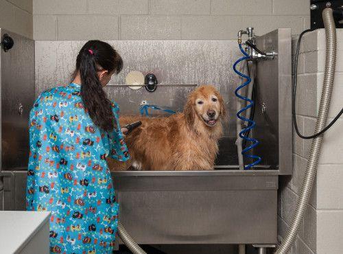 Large Dog Bathing Hospital Tour Veterinary Hospital Tours