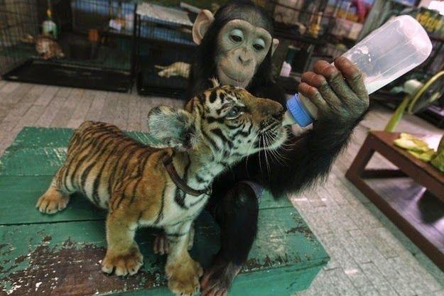 vacancyin: 23 Adorable Interspecies Friendships, must watch