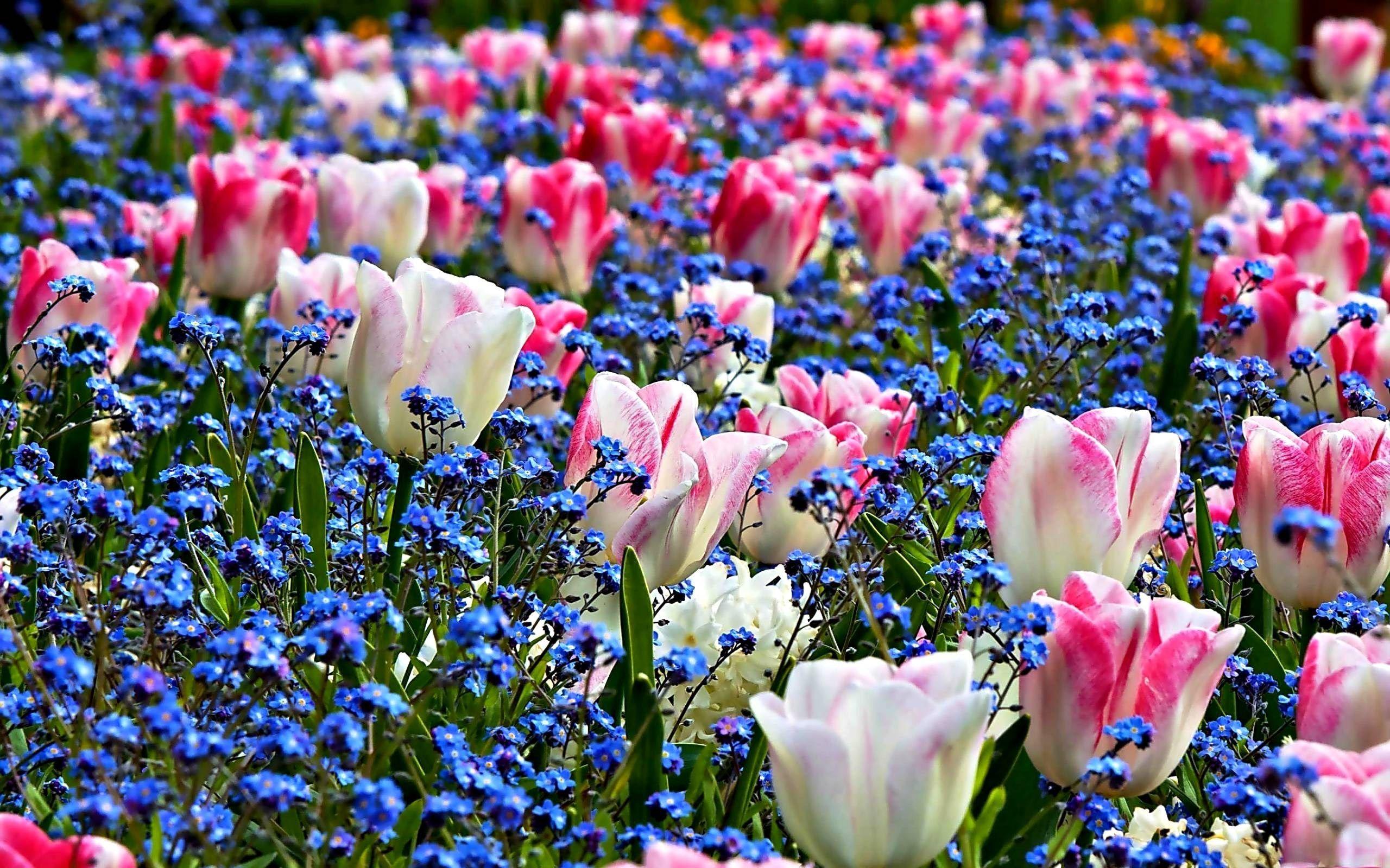 Spring Flowers Desktop Wallpapers Sharovarka Pinterest Desktop