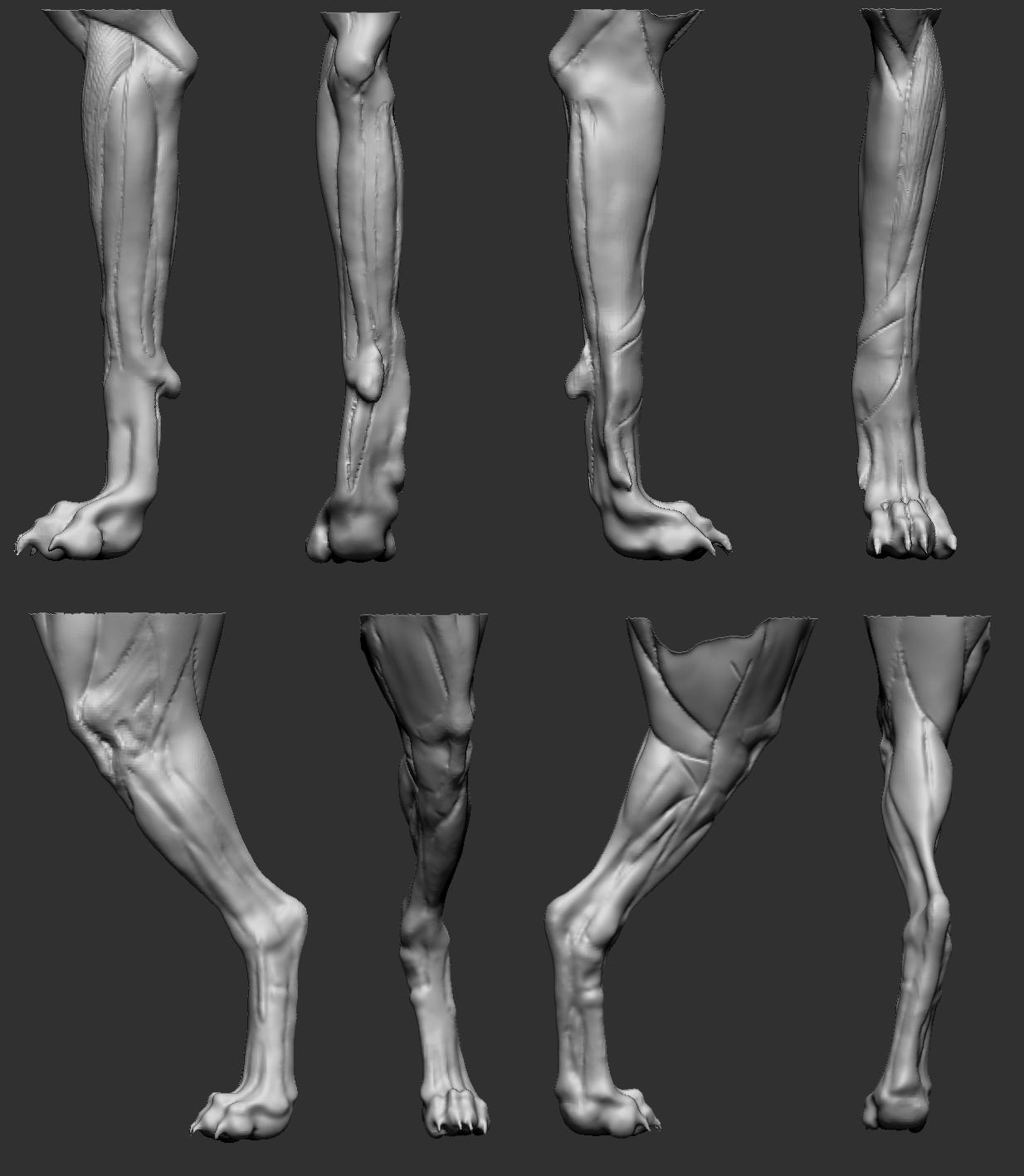 Dog leg detail Review | UArtsy | Dogs References | Pinterest | Dog ...