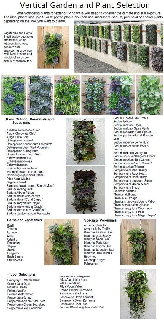 Selección de plantas para jardines verticales Green walls - plantas para jardin