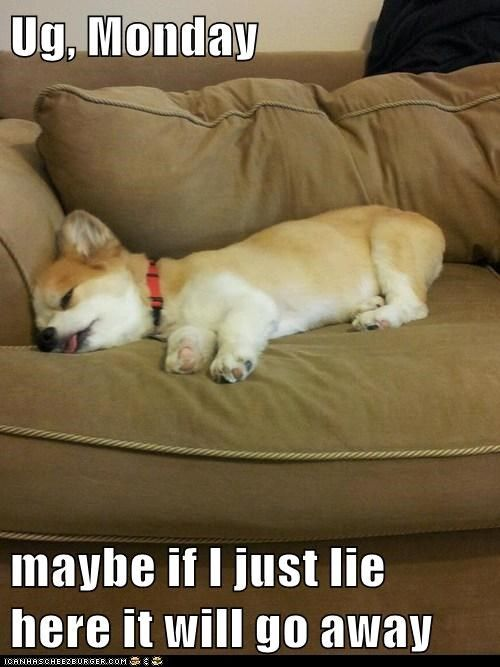 It S Monday Tuesday Quotes Funny Funny Animals Funny Animal Pictures
