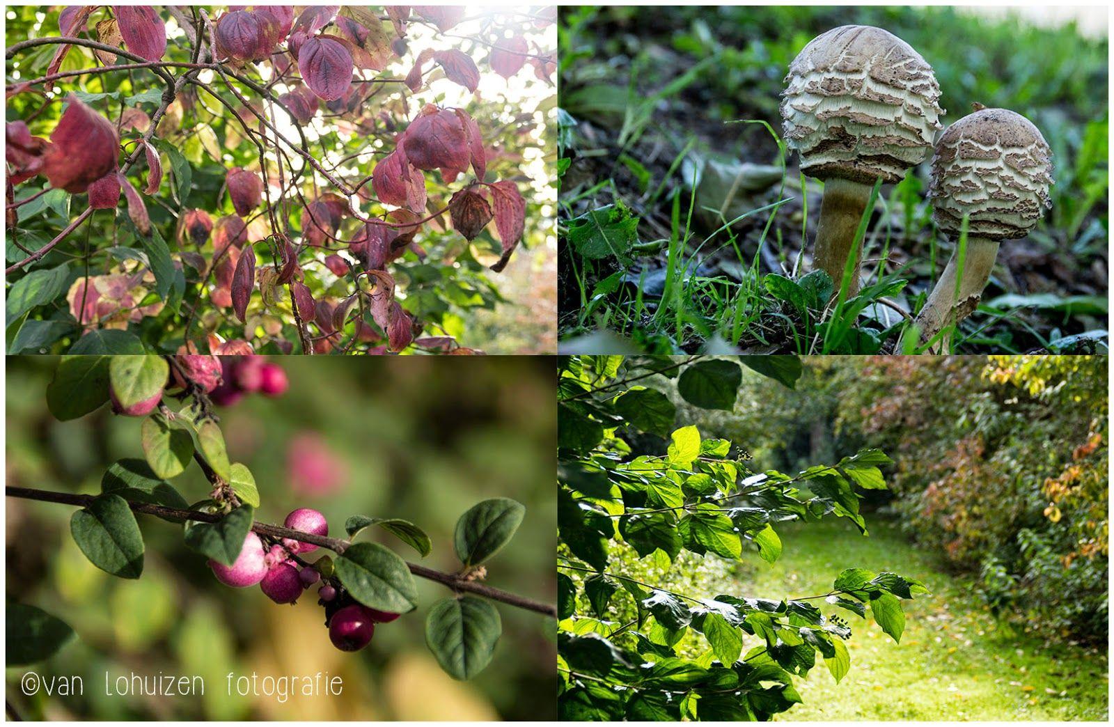 Fotografie & Lifestyle - Tips & Ideeën: Fotografeer de herfst!