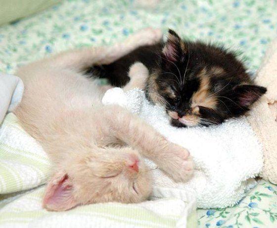 cute rescue kittens Casper and Wendy