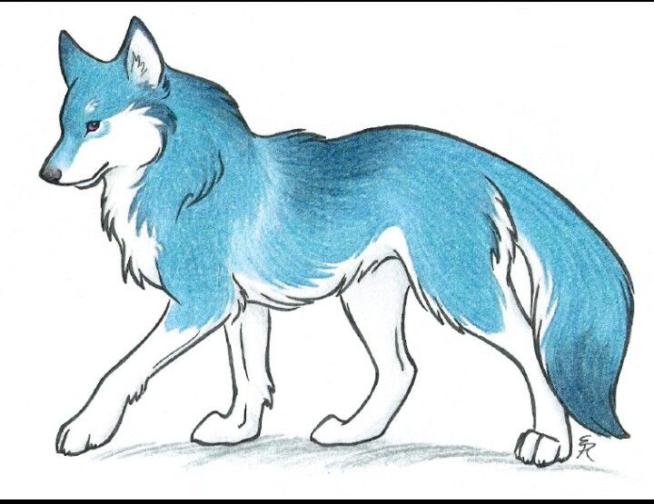 Wolf Drawing Wolf Drawing Wolf Eye Drawing Wolf Drawing Easy