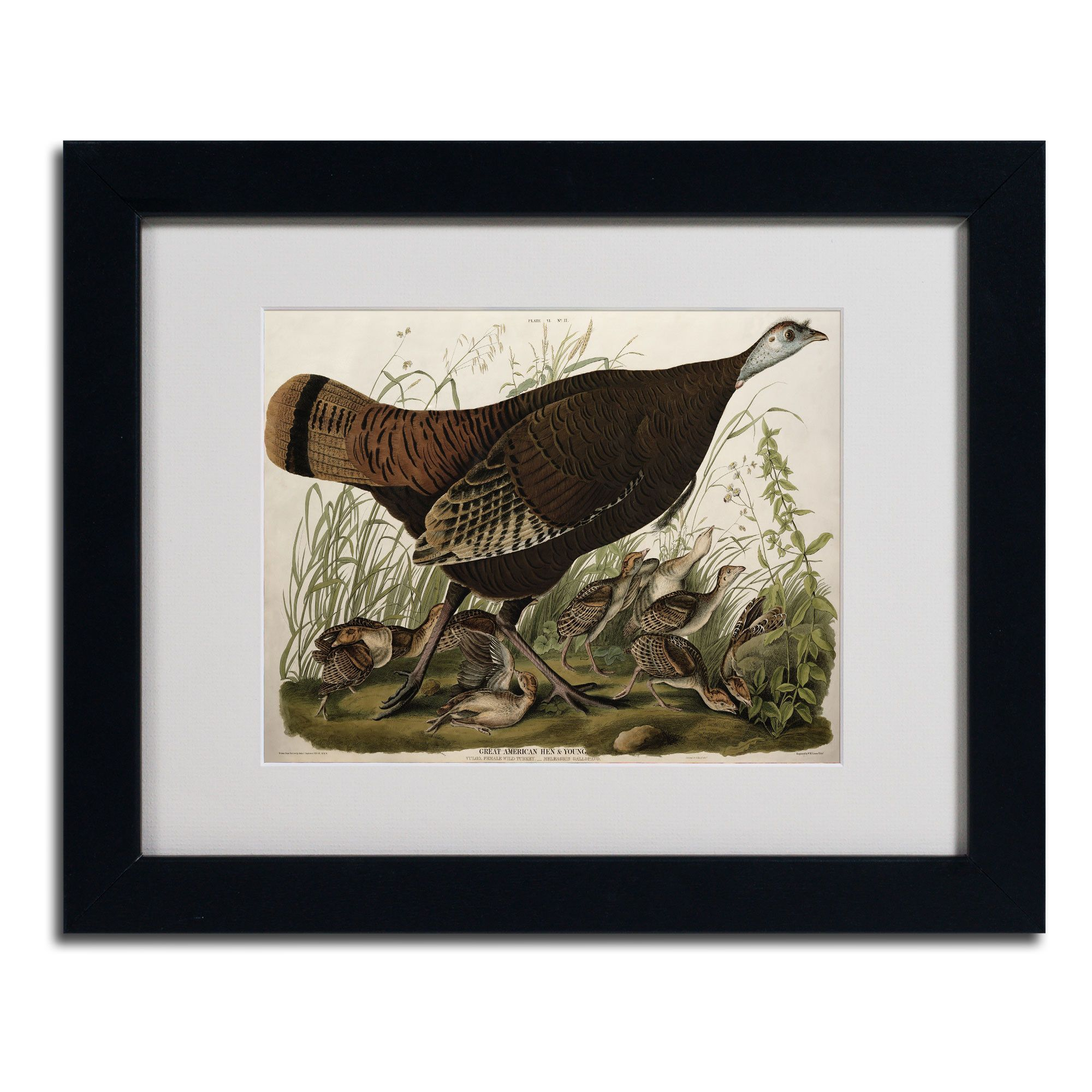 Great American Hen and Young by John James Audubon Matted Framed Painting Print
