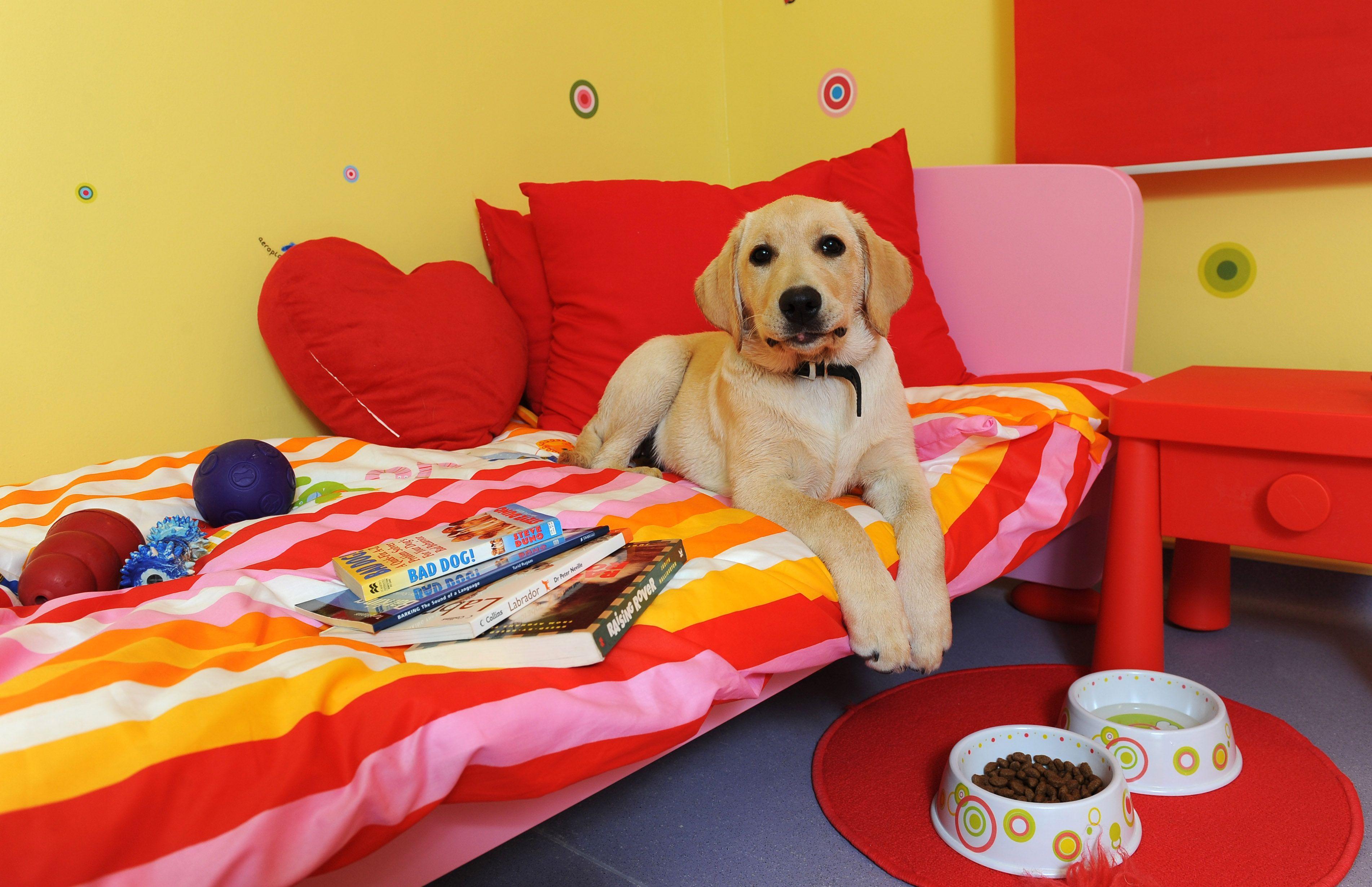 Barney Enjoying Toto S Toy Room At Royvon Dog Hotel Dog Hotel Luxury Dog Kennels Dog Boarding