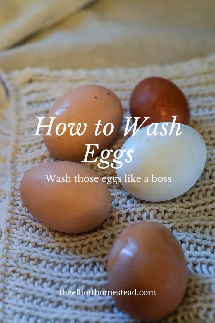 how to wash eggs the o u0027jays shells and homesteads