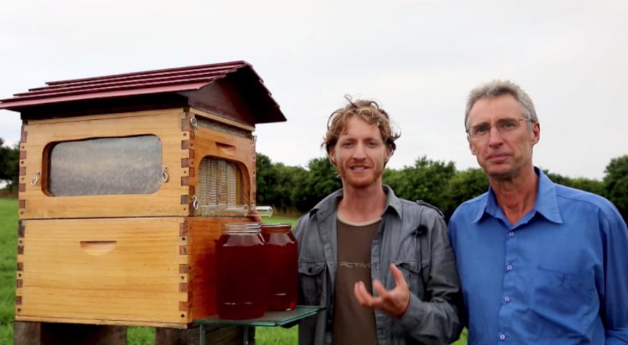Une ruche à écoulement, révolutionnaire pour faire du miel dans nuire aux abeilles