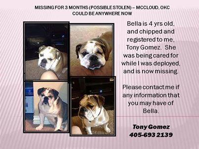 Bulldog Missing Please Share Bulldog News Dogs Animals