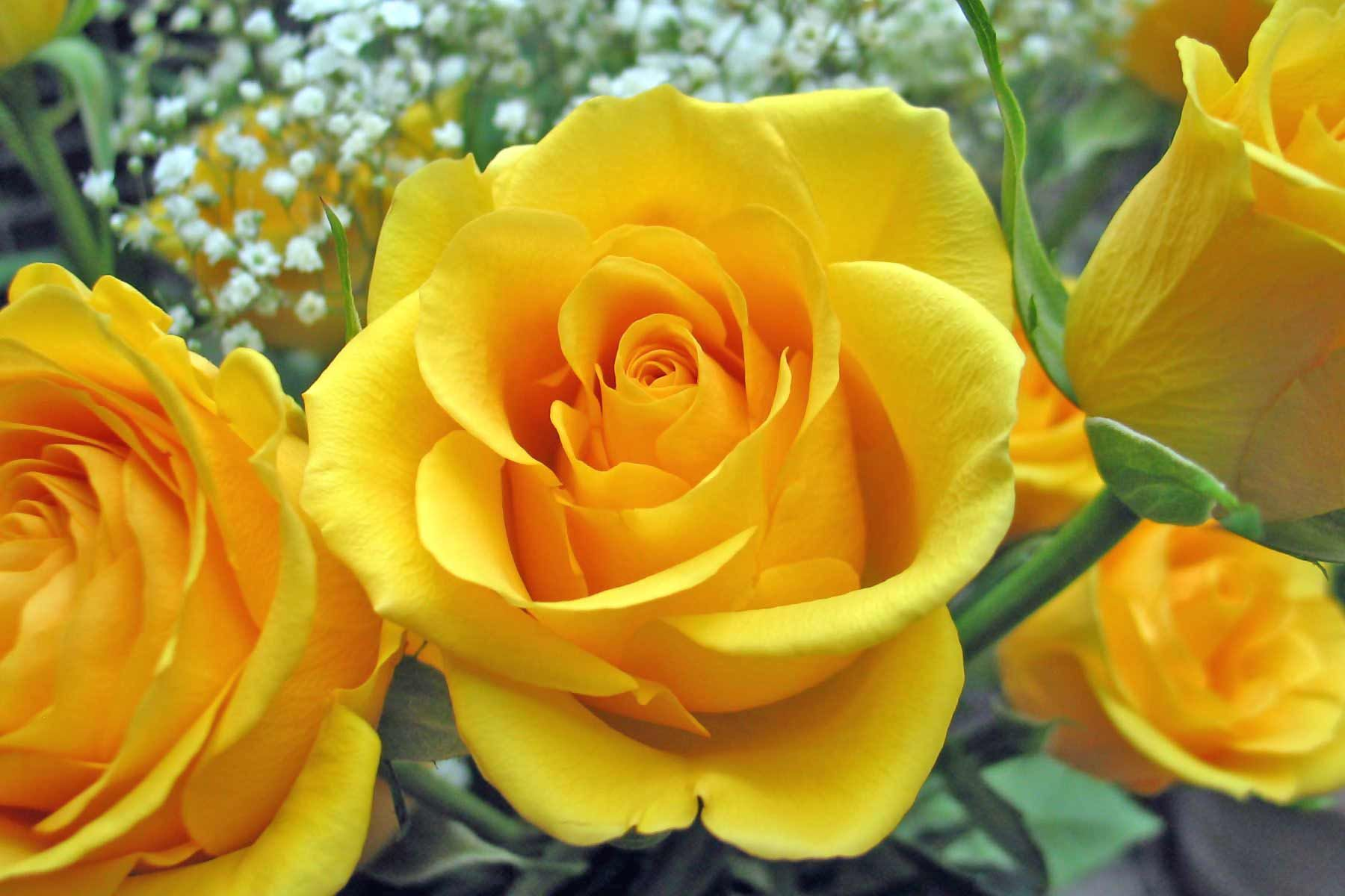 Yellow roses friendship flowers a few of my favourite things yellow roses were my mothers favorite flower thought i would share these with you brother since i see yellow rose is your favorite flower too mightylinksfo
