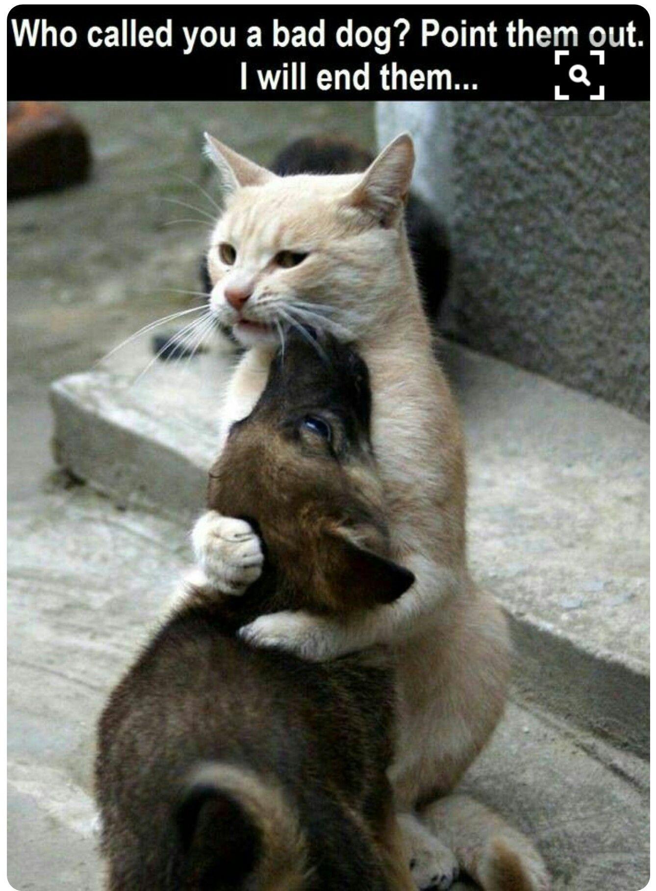 Mom Cat Xd