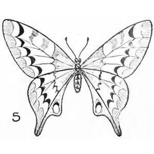 butterfly drawing easy methods how to draw butterflies - 300×300