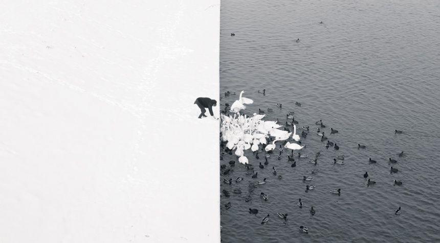 Big picture: Man Feeding Swans, by Marcin Ryczek