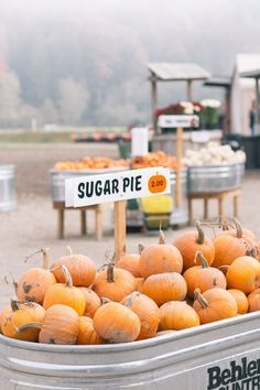 Fall in Washington. Craven Farm pumpkin patch in Snohomish. #pumpkinpatch #washington #fall #pumpkinpatch