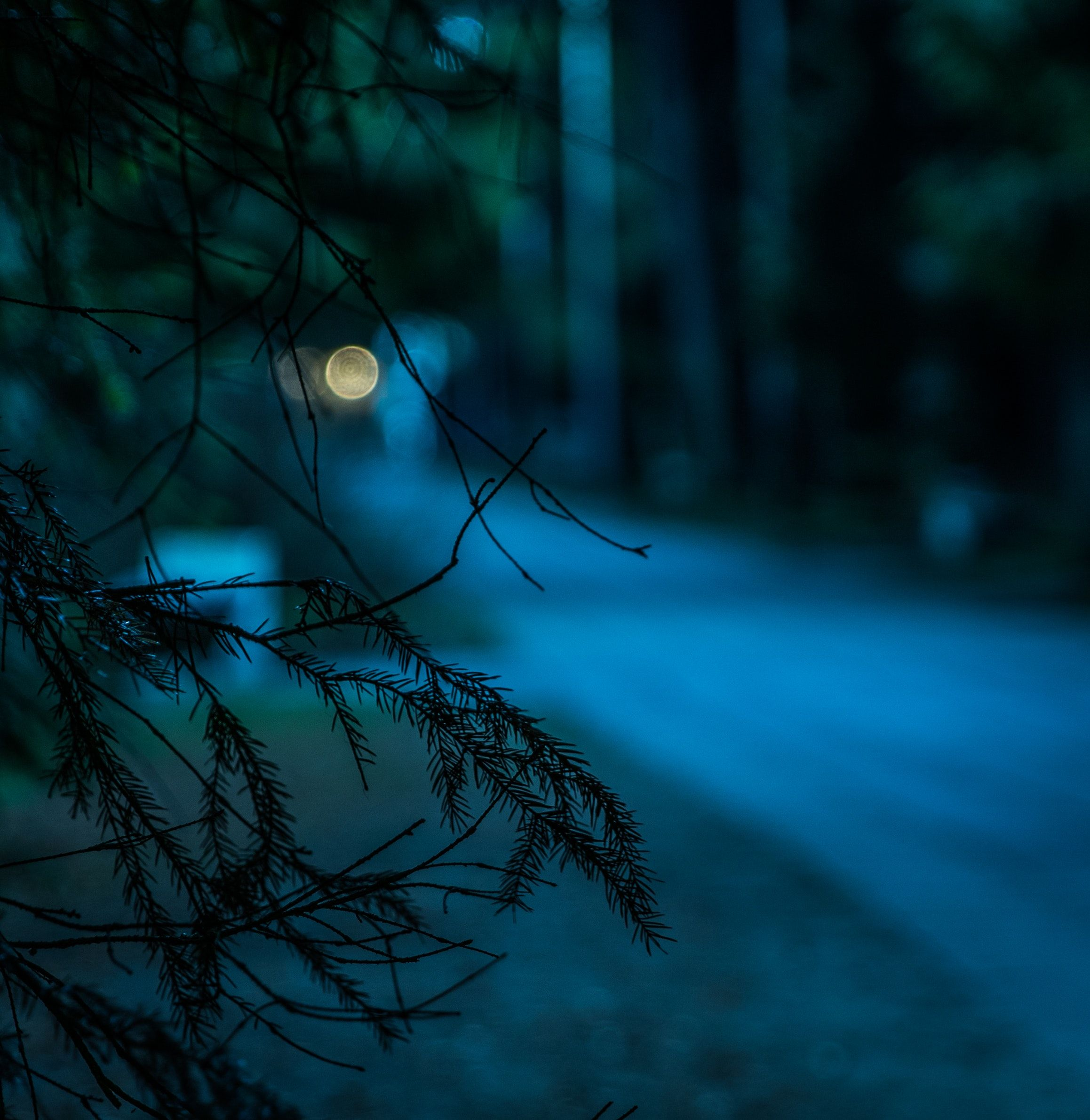 Setting Thesaurus Entry Woods At Night Writers Helping Writers Free Background Photos Background Photo Beautiful Backgrounds