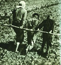 Immediately after the liberation of the region from the Nazi invaders Lotoshino residents began to revive the ruined economy of a warrior. Shocking picture of devastation and ruin represented LOTOSHINSKY land. At the site of many villages - black skeletons of burned tubes.