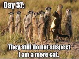 un infiltrado entre los suricatas...!
