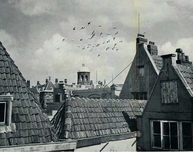 Kees Scherer : Daken. Amsterdam, 1957