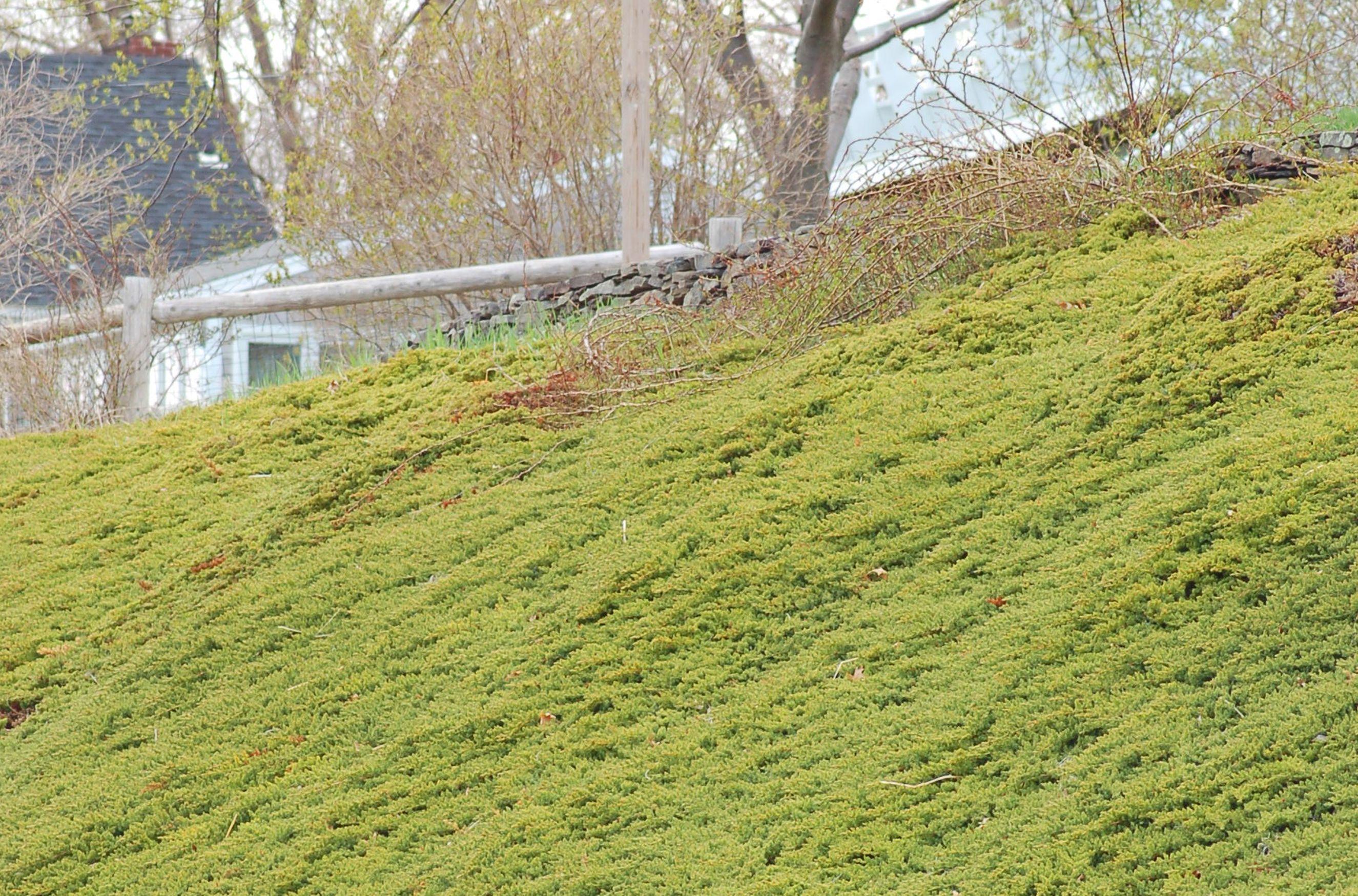 Junipers Are Up To Task Against Tough Slopes Landscaping With Rocks Hillside Landscaping Landscape Design