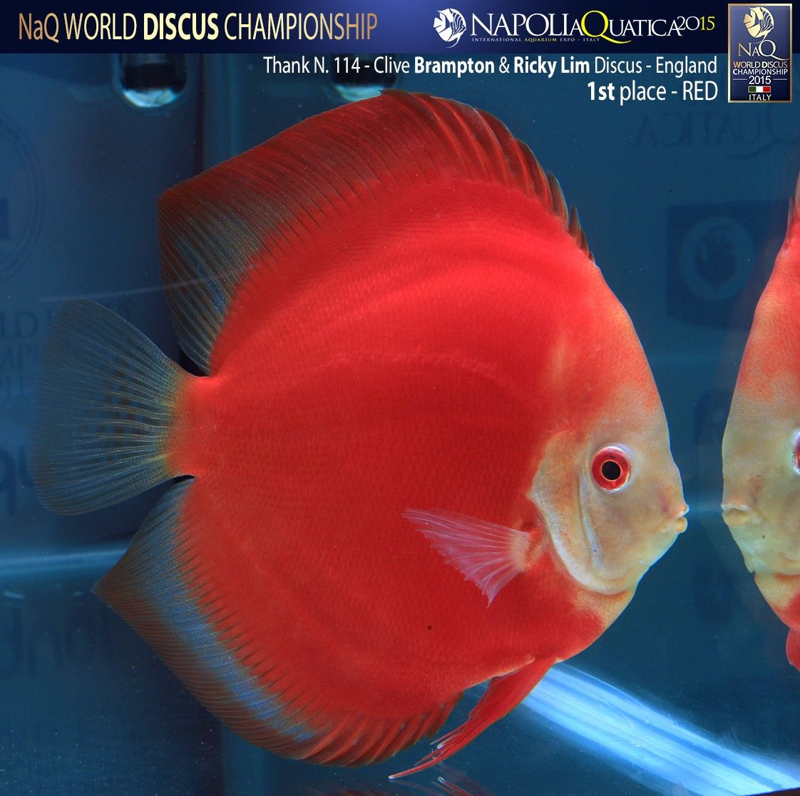 Pin by bülent erutku on discus | Pinterest | Discus and Aquariums